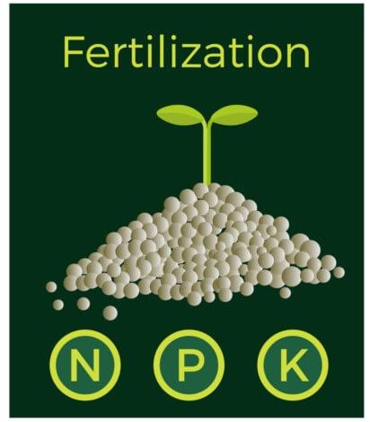 Fertilization N P K