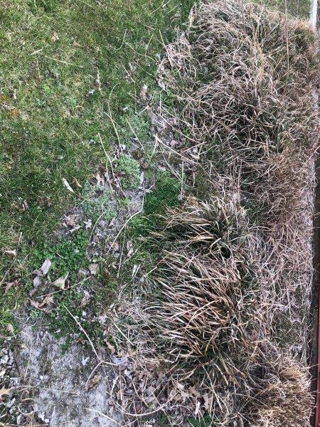 Snow Mold on grass