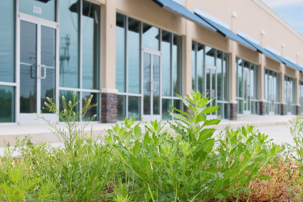 vegetation in front of a commercial building