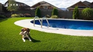 Dog next to a pool behind houses