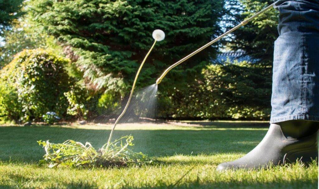 spot weed spray